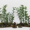 bamboo2schrift1
