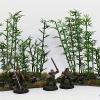 bamboo1schrift1